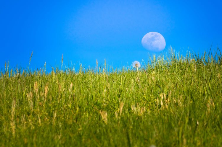 During the day, a waxing gibbous moon rises along a hillside of Spring green grass and dandelion.