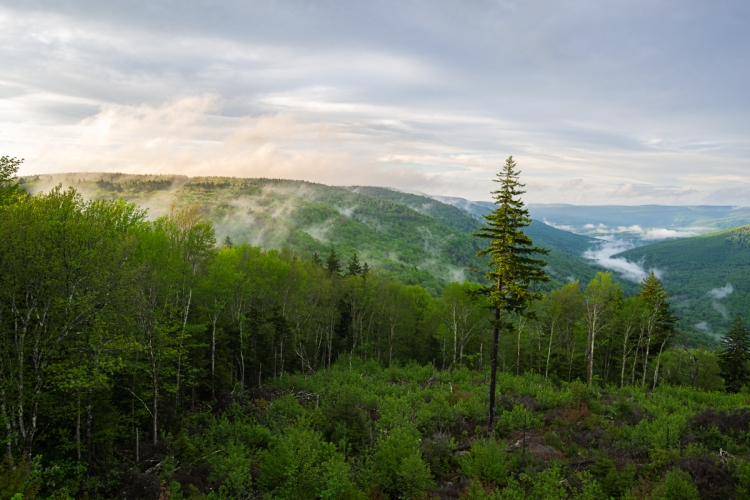 Williams River Overlook - Marlinton, West Virginia.jpg